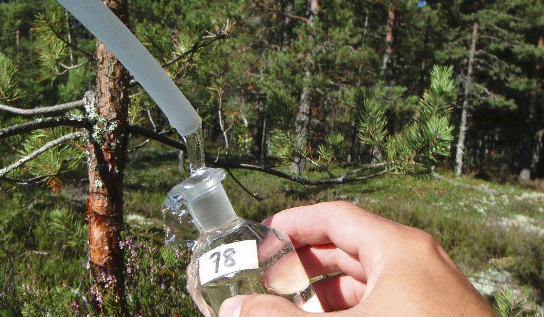 Grundvattnet – rent dricksvatten under våra fötter