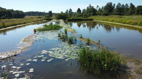 Våtmarken i Oinasjoki